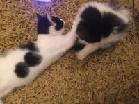 Kittens for sale / not scam