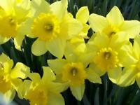 Daffodils Home Education Support Service