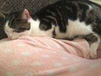 Lovely male cat for forever loving home!!