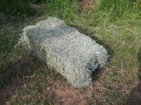 hay bale, made with no sprays, no rain barn stored bales, 2018 crop