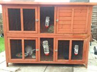 Two rabbits and two tier hutch for sale