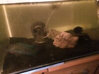 2 fish and tank free to collector