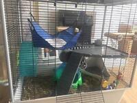 Chinchilla and cage