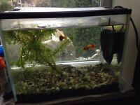 Fish Tank and 2 Fish for sale plus near new filter
