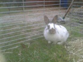 Ten gorgeous rabbits ready now