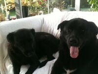 PET SITTER/PET SITTING/HOUSE CHECKING/PET MINDING/ COUNTY DOWN/ARDS PENINSULA/BANGOR/DONAGHADEE