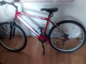 "18"" Frame Gent's Raleigh Activ Daytona Mountain Bike"