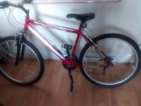 "18"" Frame Gent's Raleigh Activ Daytona Mountain Bike"