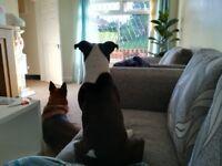 Petsitter/Dogwlker