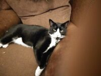 Lost Tues 21st. willerby Road area. Has yellow collar with name tag scar on nose, scary looking cat.