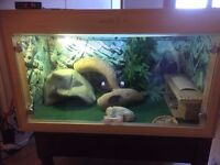 Lovely Vivarium for Bearded Dragon for Sale - Everything you need!