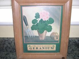 A framed and glazed print of a potted geranium from the original by M.Wiscombe.