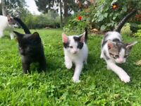 Beautiful Kittens for Sale - ready now
