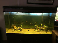 4 ft tropical fish tank with fish