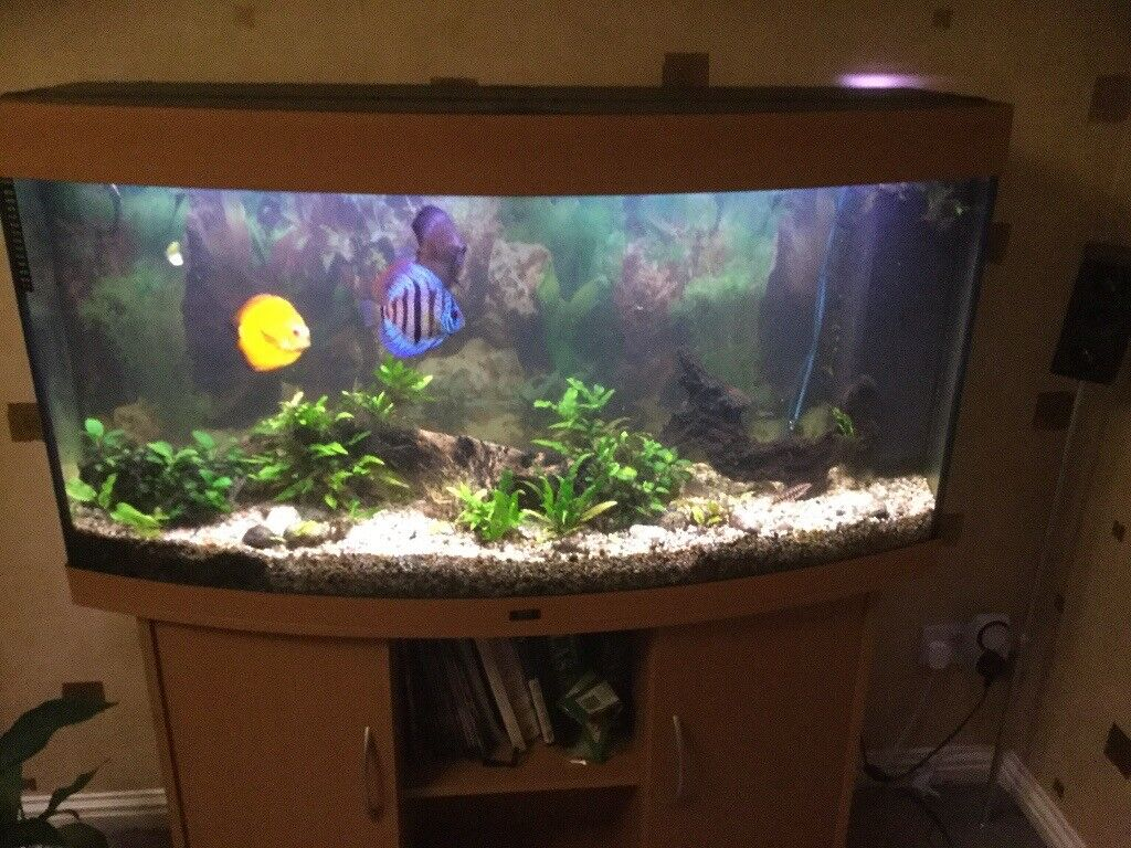 juwel vision 260 aquarium fish tank accessories in livingston west lothian gumtree. Black Bedroom Furniture Sets. Home Design Ideas