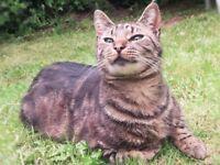 Missing Vulnerable Cat