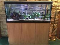 fluval roma 240 aquarium