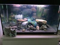 BARGAIN ** Fluval aquarium 125 litre