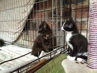 4 Beautiful Kittens - 2 left!