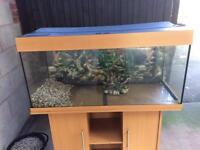 Fish tank for sale in excellent condition
