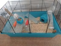 Female syberian hamster - 10 months old, cage and ball.