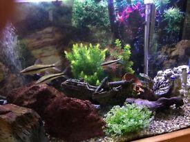 Fish Aquarium. Stunning American Oak Cabinet & 200ltr Tank. + Accessories
