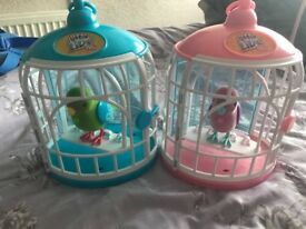 Live pets birds with cage X2