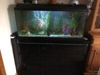 Large fish tank for salr