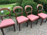 Set of four baloon back chairs ....recently recovered
