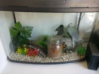 Fish Tank and Supplies