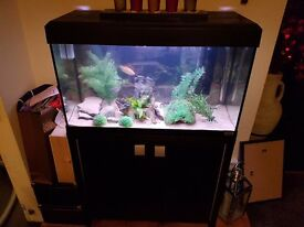 Fluval Roma 125 fish tank with cabinet, includes 10 fish + accessories