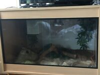 2 Corn Snakes | large vivarium + accessories included
