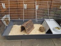 Rabbit cage and food