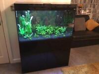 Fish Tank Tropical Aquarium