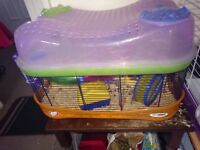 2 x Dwarf Hamsters + Cage and accessories