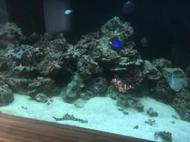 Marine fish and coral