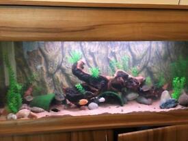 Seashell aquarium set up