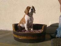 Oak Whisky Barrel Dog Bed