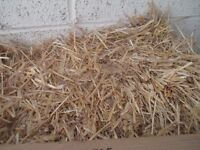 Huge Bail of Straw for puppies, small pets, rabbits