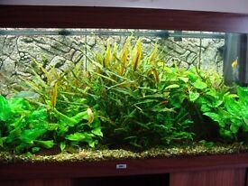 Tropical fish aquatic plants