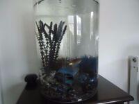 Biube 35 litre fish tank