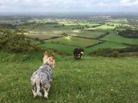 Brighton/Hove Active Dog Walking Service