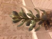look realistic decoration in glass cover SUCCULENT artificial plant minimal style