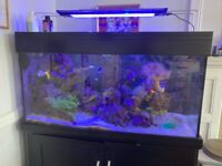 Livestock Now For Sale Separately - plus 400L Marine Tank, All equipment
