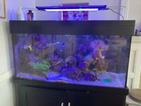 400L Marine Tank, Fully Equipped, Mature Tank With Livestock And Extras