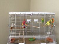2x budgies and cage and toys