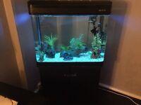 Boyu 200litre fish tank