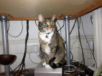 MISSING TORTOISESHELL TABBY, NW5 DARTMOUTH PARK