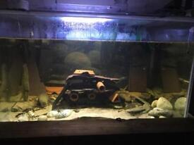 Large pleco tank