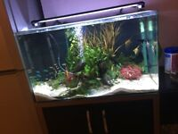 ~REALISTIC OFFERS~ 130l aqua asprie, full set up, with extras